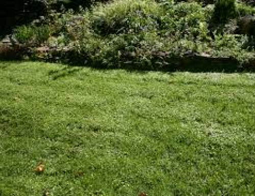 Spring lawn care tips with O'Briens