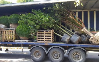 tree deliveries
