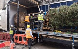 urban tree delivery