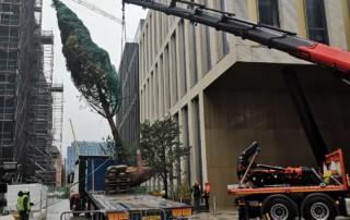 urban tree planting