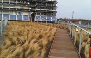 roof top landscape with grasses