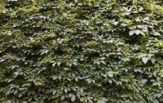 green wall foliage 3