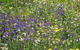 flower meadow 1