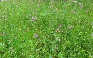 flower meadow 2