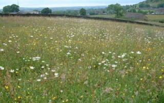 flower meadow 3