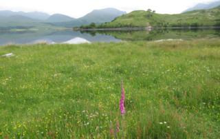 flower meadow 4